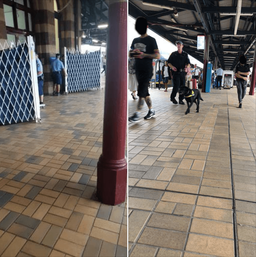 Privacy screens and dog-sniffers at Central Station, Sydney