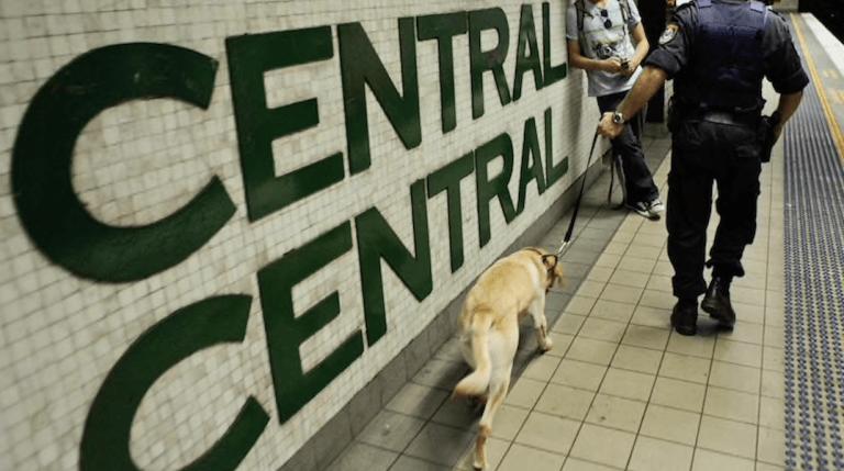 Drug Sniffer Dog Police Railway Station