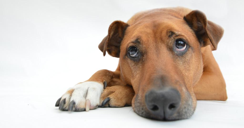 Dog used for prisoner rehabilitation
