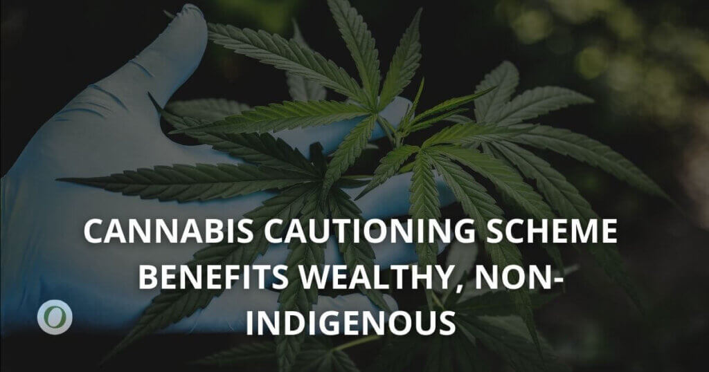 Cannabis cautioning benefits wealthy, non-Indigenous people showing marijuana plant