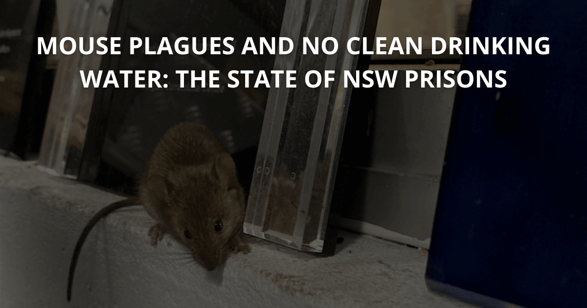 Mouse plagues and no clean drinking water The state of NSW prisons